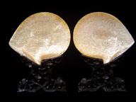 Pair of Chinese Carved Shells